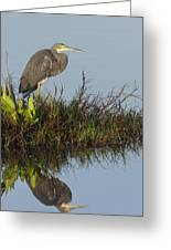 Tri-colored Heron And Reflection Greeting Card