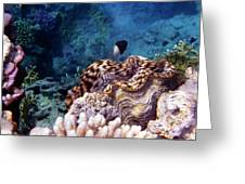 Tridacna Squamosa  Greeting Card