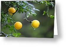 Trifoliate Orange Greeting Card