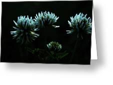 Trifolium Montanum Greeting Card