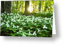 Trillions Of Trilliums Greeting Card