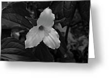 Trillium 2 Bw Greeting Card