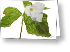 Trillium  Greeting Card