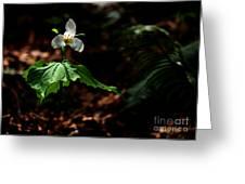 Trillium In The Woods Greeting Card