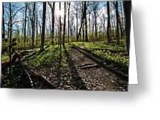 Trillium Trail Greeting Card by Matt Molloy