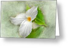 Trillium Wildflower  Greeting Card