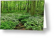 Trillium Woods Vi Greeting Card