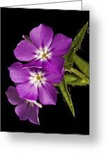 Trio In Purple Greeting Card