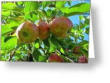 Trio Of Apples Greeting Card