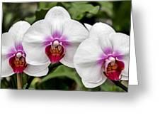 Trio Of Beautiful Flowers Greeting Card