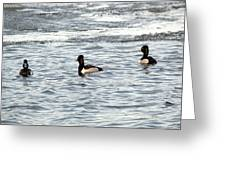 Trio Of Ducks Greeting Card