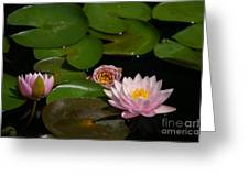 Trio Of Pink Lotus Waterlilies Greeting Card