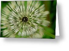 Triple Dandelion Greeting Card