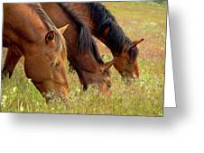 Triple Mustang Treat Greeting Card