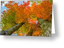 Triple The Maples Greeting Card