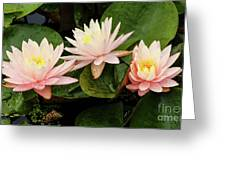 Triplet Water Lilies Greeting Card