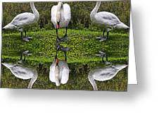 Triplets In Reflection Greeting Card