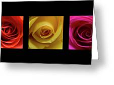 Triptych Roses Greeting Card