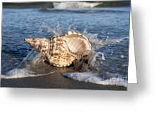 Triton Shell  Greeting Card