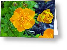 Trollius Blossom Greeting Card