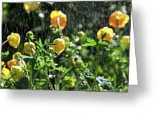 Trollius Europaeus Spring Flowers In The Rain Greeting Card