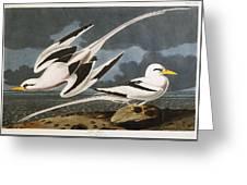 Tropic Bird Greeting Card