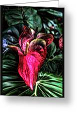 Anthurium Red Tropical Flower Greeting Card