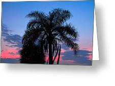 Tropic Sunset In Floirida Greeting Card