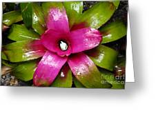 Tropic Wonder Greeting Card