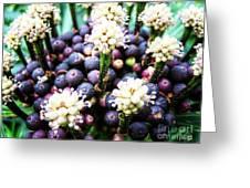 Tropical Berries 3 Greeting Card