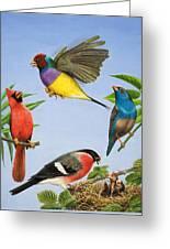 Tropical Birds Greeting Card