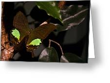 Tropical Buterfly Greeting Card