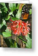 Tropical Butterfly On Flower Greeting Card