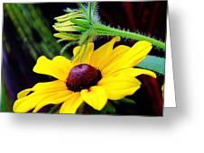 Tropical Canna Susan Greeting Card