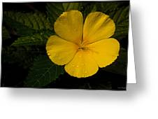 Tropical Dew Greeting Card