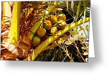 Tropical Dreams 1 Greeting Card