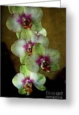 Tropical Dreams 2 Greeting Card