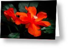 Tropical Elegance Greeting Card