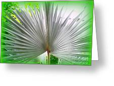 Tropical Fan Greeting Card