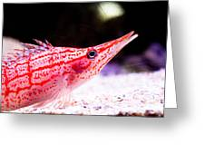 Tropical Fish Greeting Card