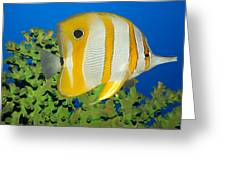 Tropical Fish Butterflyfish. Greeting Card