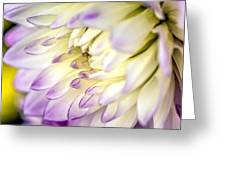 Tropical Flower 11 Greeting Card