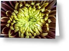 Tropical Flower 13 Greeting Card