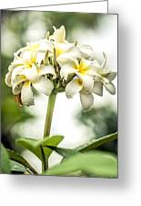 Tropical Flower 7 Greeting Card