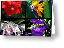 Tropical Flowers Multiples Greeting Card