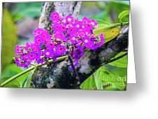 Tropical Flowers Of Costa Rica Greeting Card