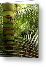 Tropical Forest Jungle Greeting Card