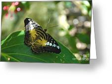 Tropical Garden Beauty Greeting Card