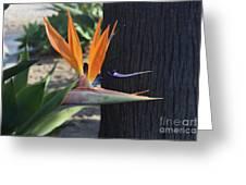 Tropical Garden Photo Of A Bird Of Paradise  Greeting Card