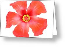 Tropical Hibiscus Flower Vector Greeting Card